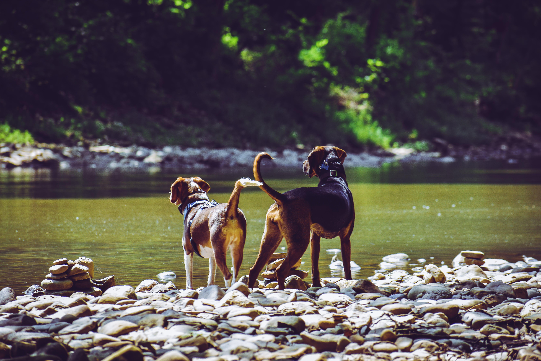 Gratis stockfoto met beest, daglicht, h2o, honden
