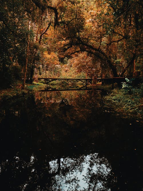 Brown Bridge Surrounded by Brown Leaf Trees Photo