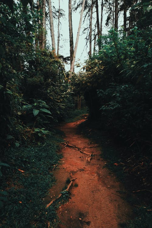 Ingyenes stockfotó erdei ösvény, erdő, fák, fény témában