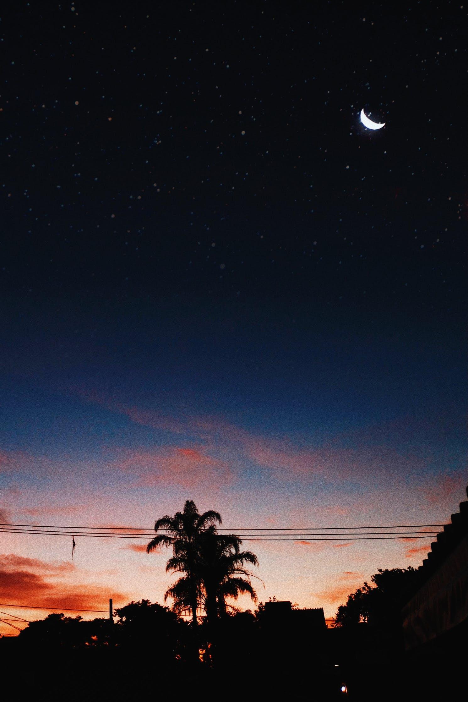 açık, ağaçlar, akşam