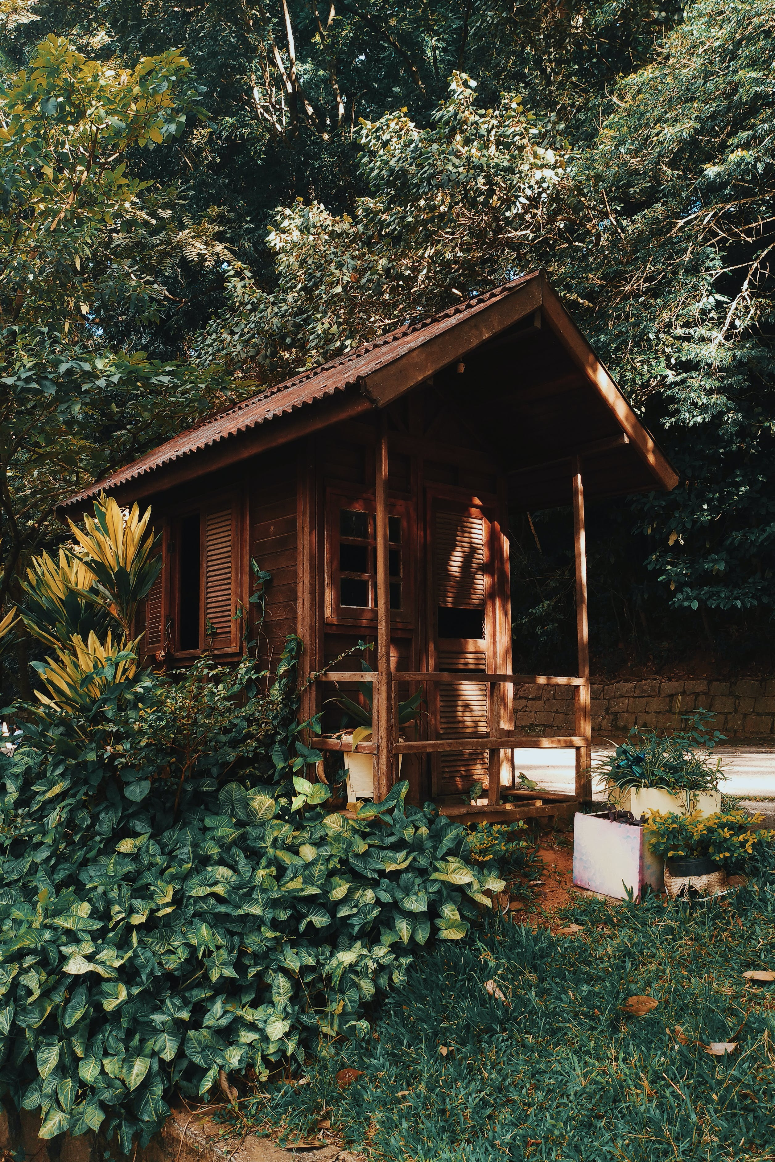 Brown Wooden House Near Plants and Trees