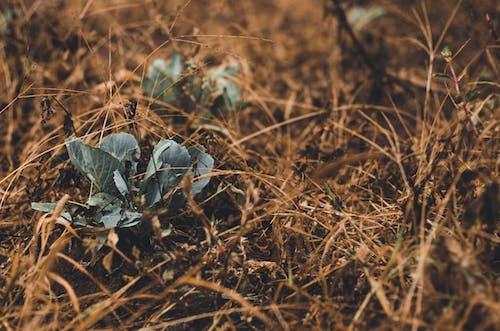 Immagine gratuita di boschi, contrasto, crescita, giardino