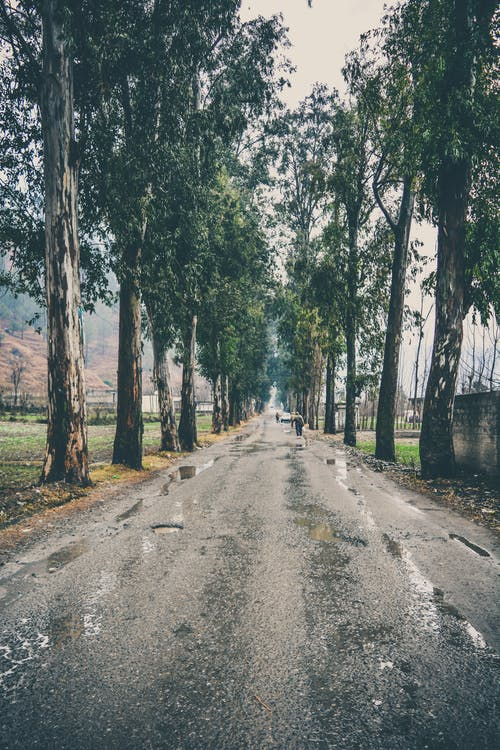 Free stock photo of after the rain, rain, road, tree