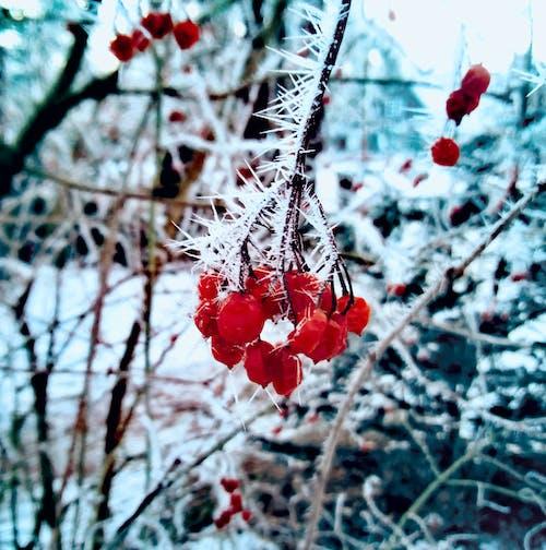 Foto d'estoc gratuïta de baia, congelat, hivern