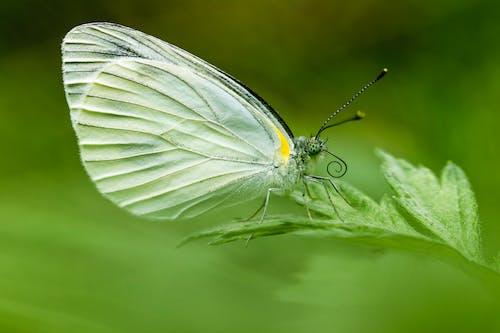 Darmowe zdjęcie z galerii z motyl