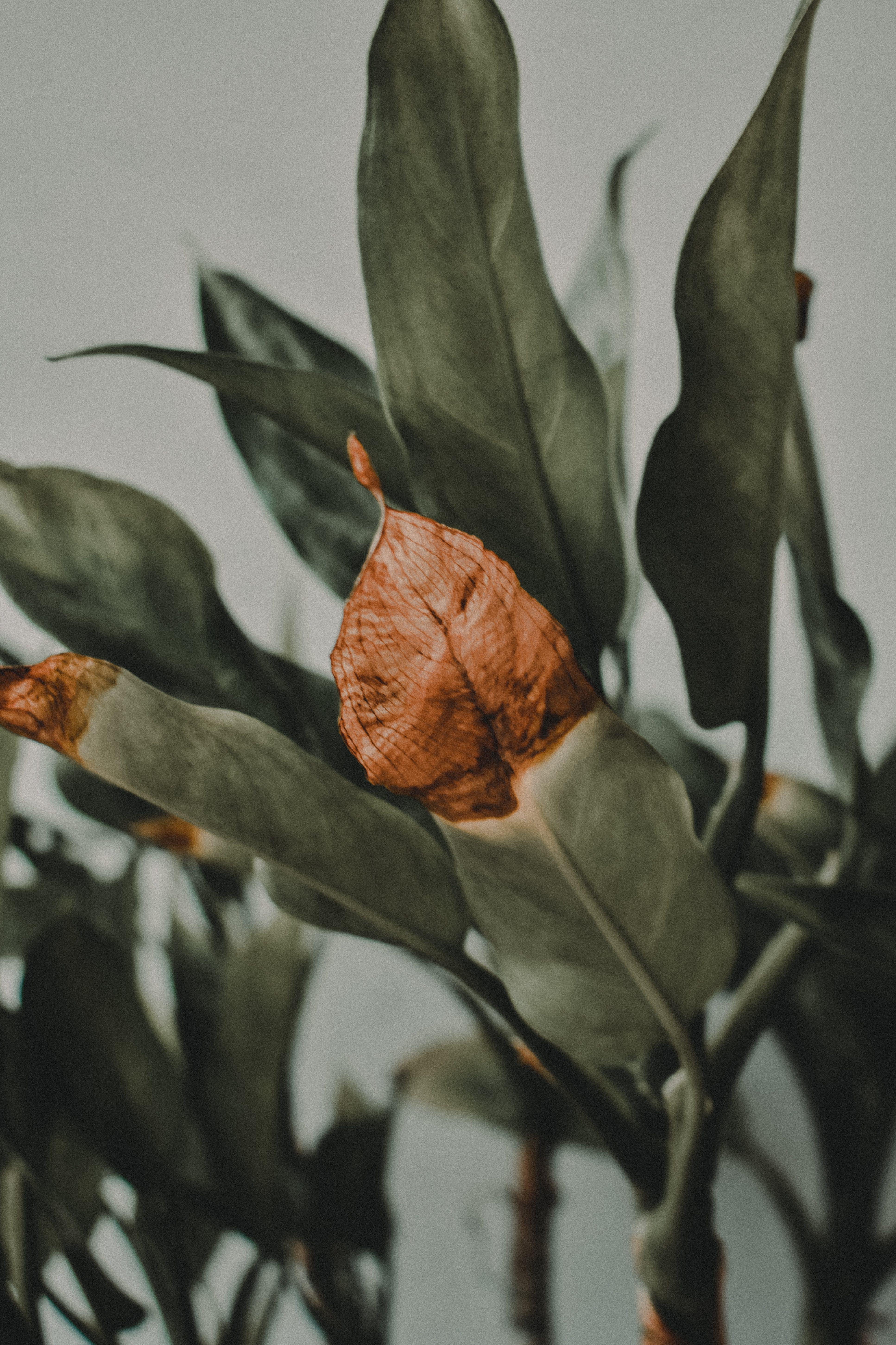 Kostenloses Stock Foto zu ast, biologie, blätter, blühende pflanze