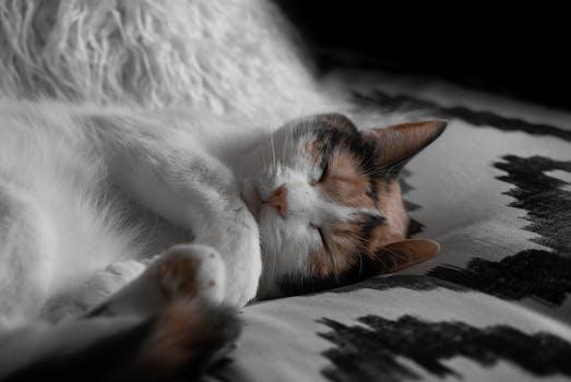 Yellow Tabby Cat 183 Free Stock Photo