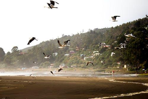 Kostenloses Stock Foto zu #tierwelt, möwen, sommer, strand