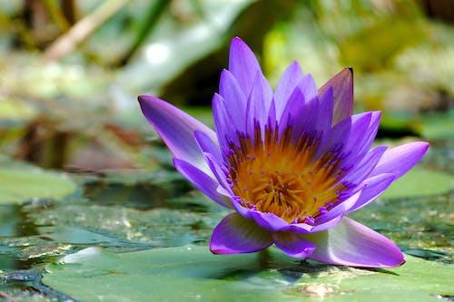 Gratis lagerfoto af blomst, farve, grøn, lilla
