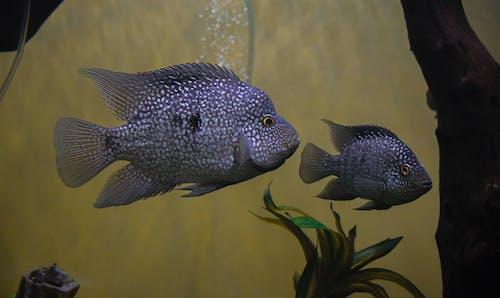 Kostnadsfri bild av akvarium, dehradun, detaljer, djurpark