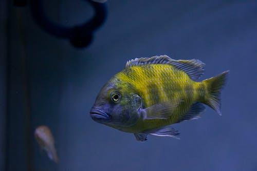 Kostnadsfri bild av akvarium, detaljer, ensam, fenor