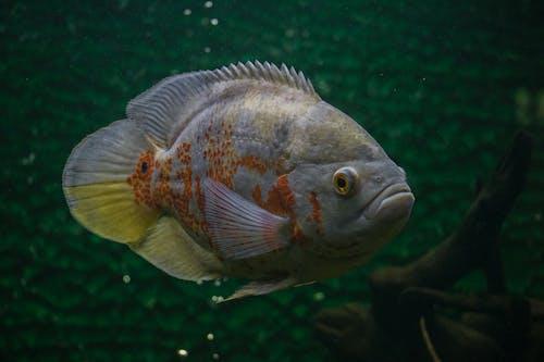 Kostnadsfri bild av akvarium, djup, djur, exotisk