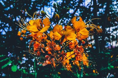 bulanık, bulanık arka plan, bulanıklık, Çiçek demeti içeren Ücretsiz stok fotoğraf