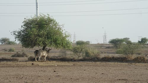 Fotos de stock gratuitas de animales domésticos, cría de animales, fotografía de animales, ganadería