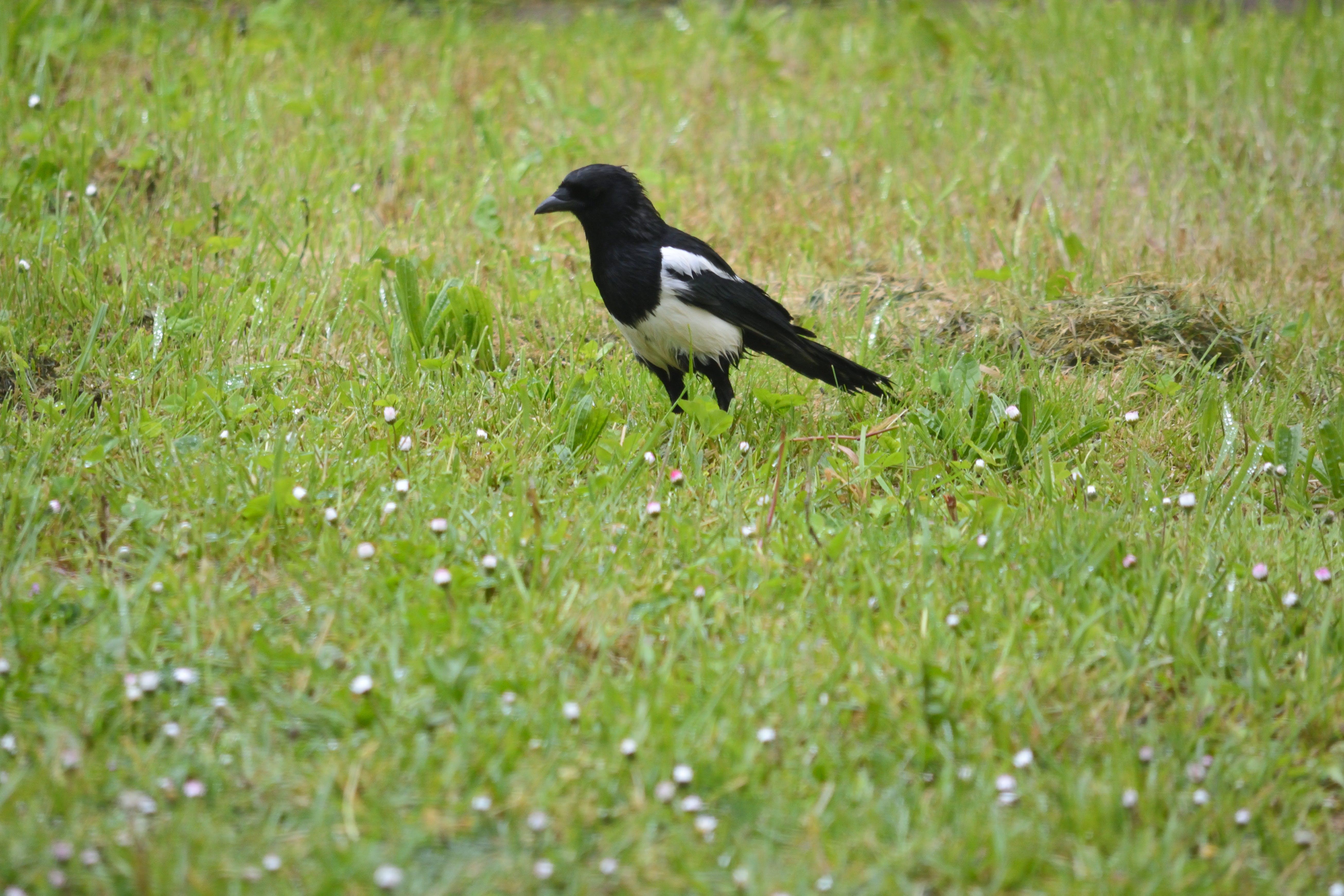 Δωρεάν στοκ φωτογραφιών με bec, faune, noir et blanc, oiseau
