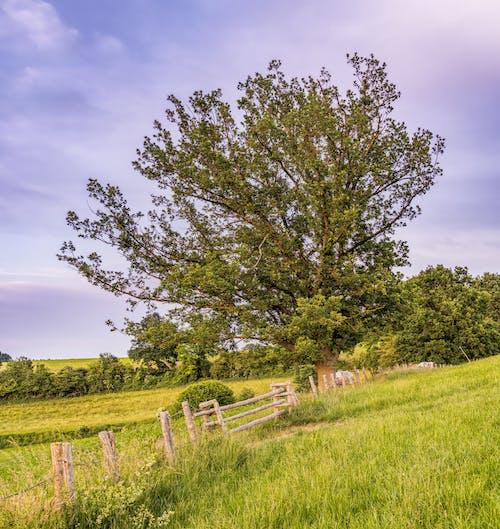 Immagine gratuita di alberi, ambiente, azienda agricola, campo