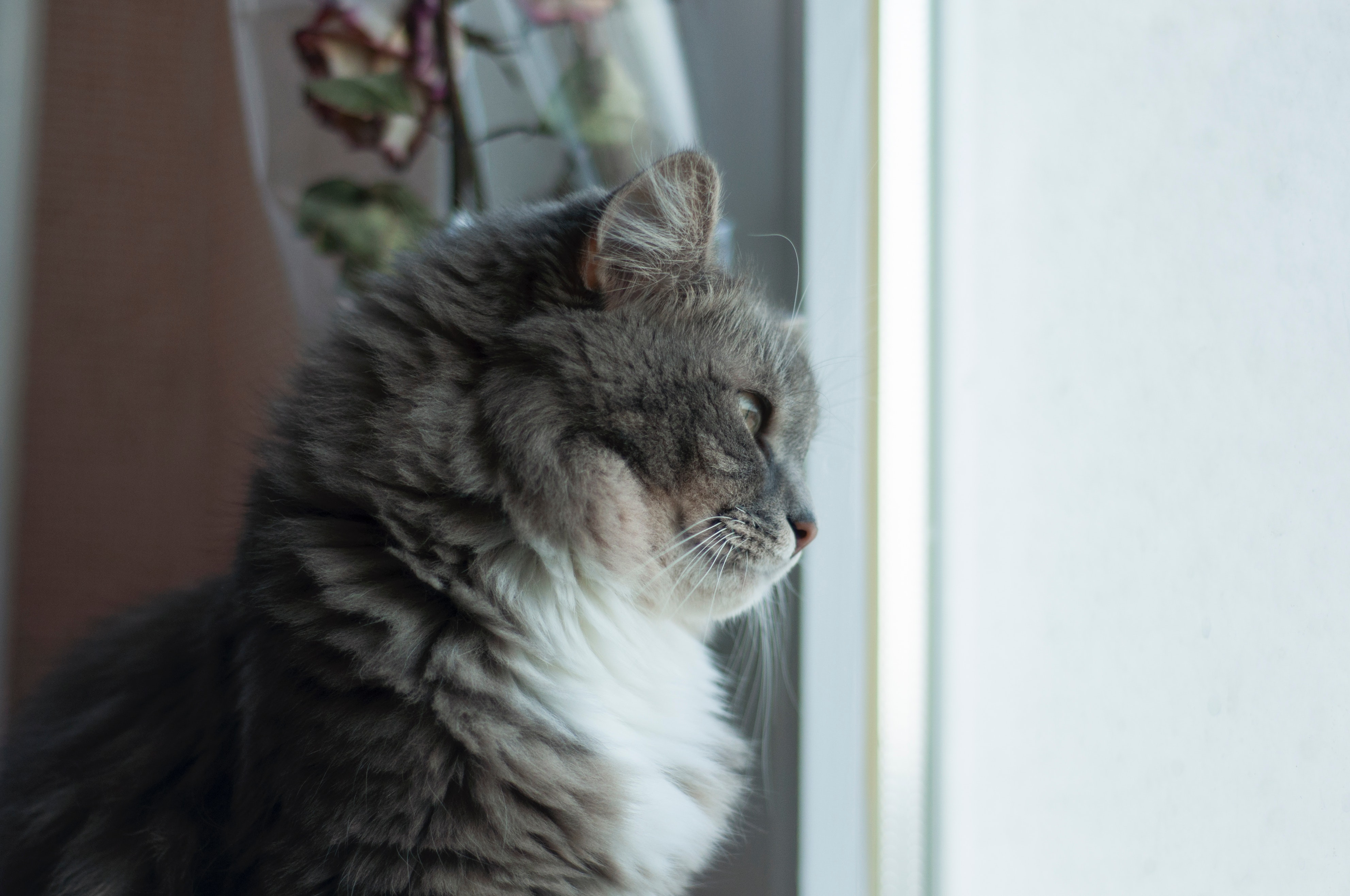 Foto stok gratis tentang kucing
