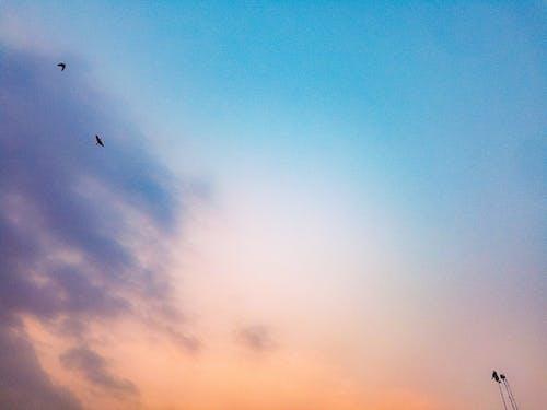 Ảnh lưu trữ miễn phí về # chim, Adobe Photoshop, ảnh trừu tượng, chụp ảnh góc rộng