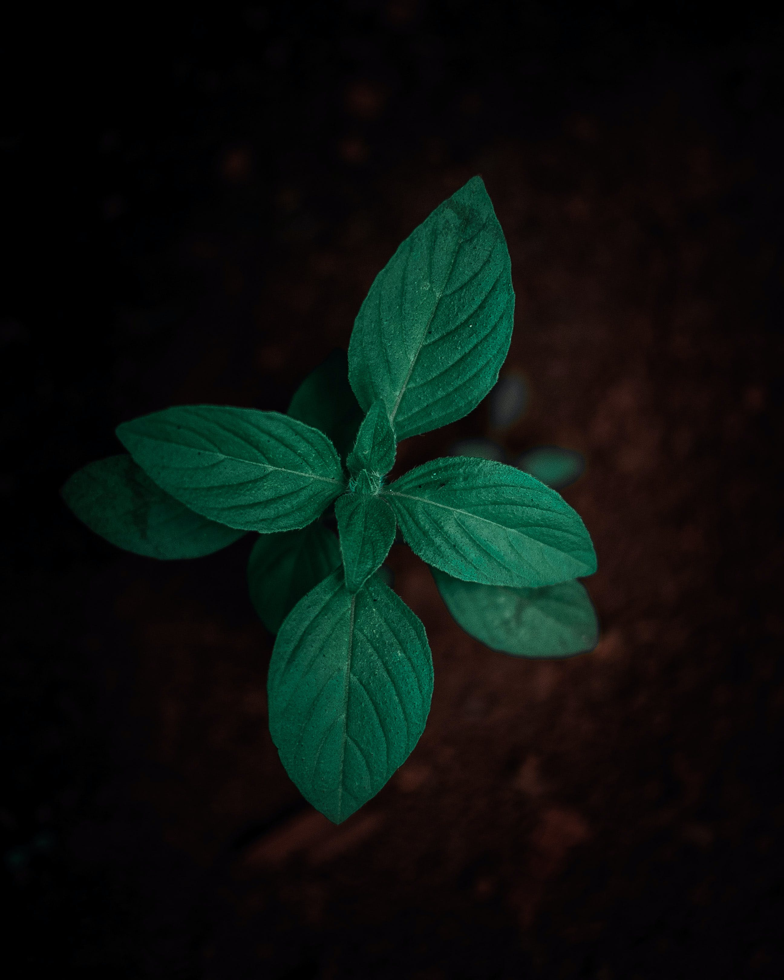 Shallow-focus Photography of Green Leafed Plant