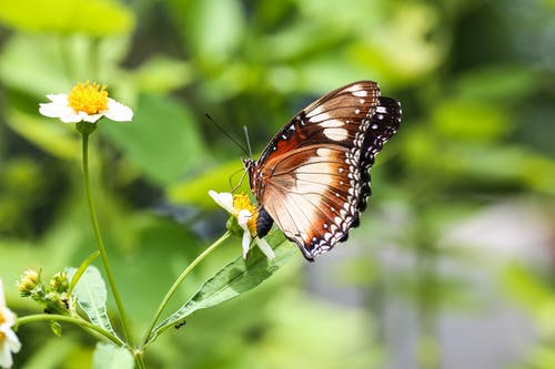 Immagine gratuita di animale, farfalla