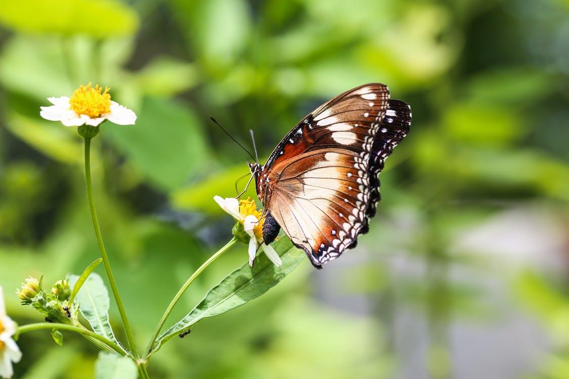 eläin, perhonen