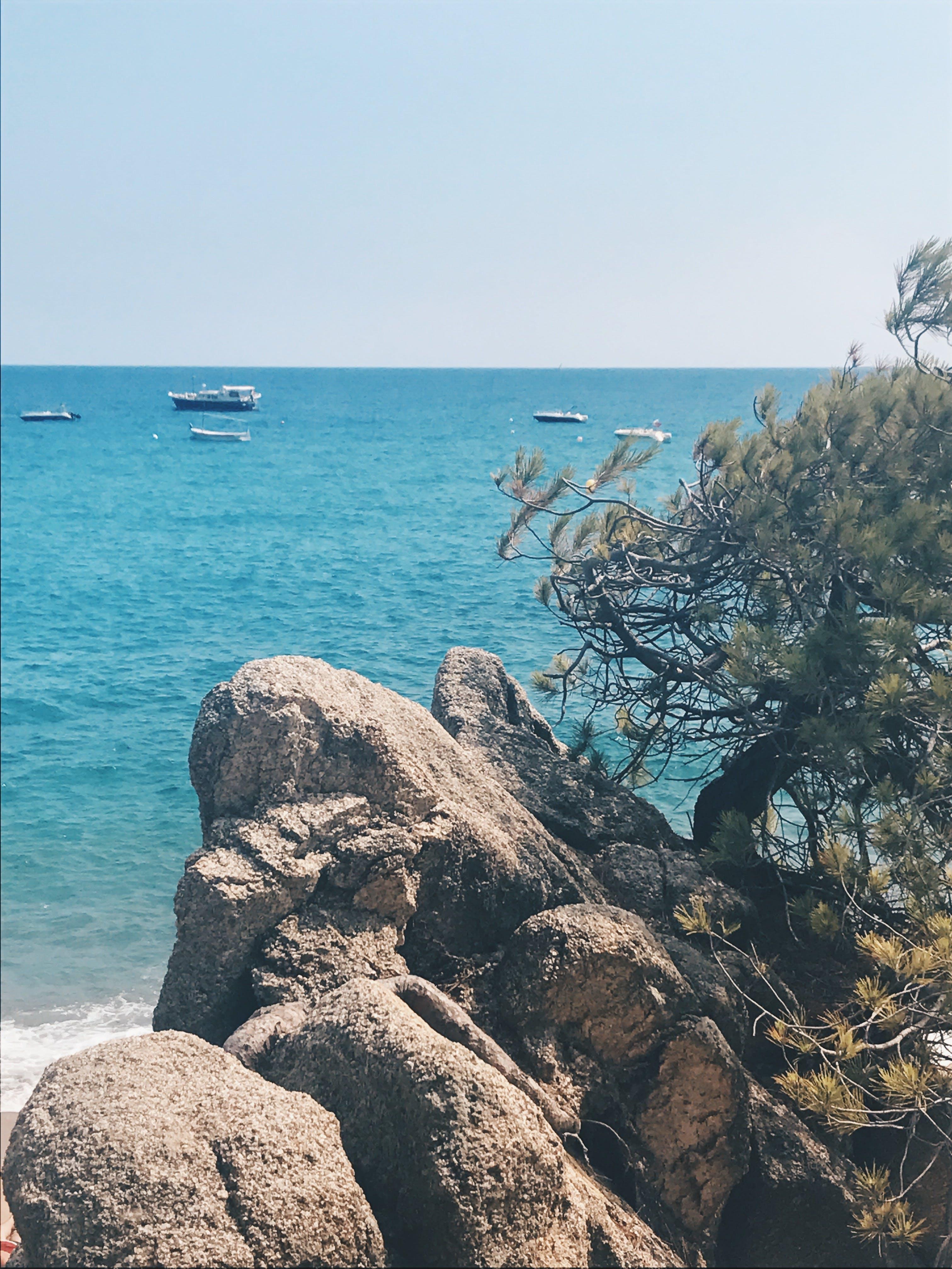 Free stock photo of mediterranean sea, rocks, sea life, sunny day
