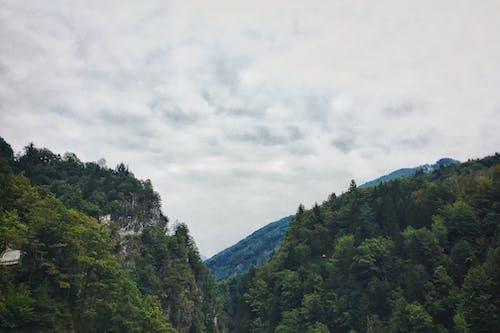 Imagine de stoc gratuită din #pădure, albastru, albastru închis, arbori