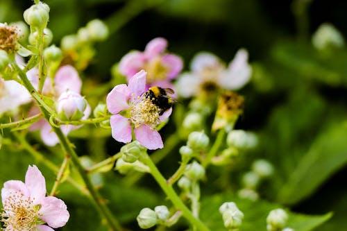 Photos gratuites de abeille, bourgeons, clairière, couleur