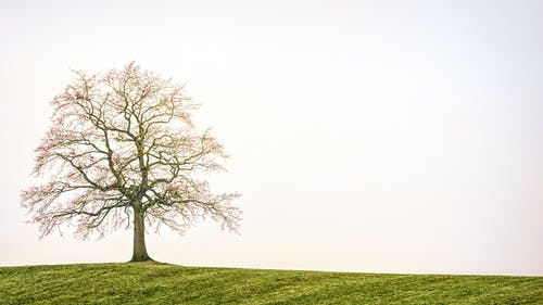 Foto stok gratis alam, bidang, cabang pohon, di luar rumah