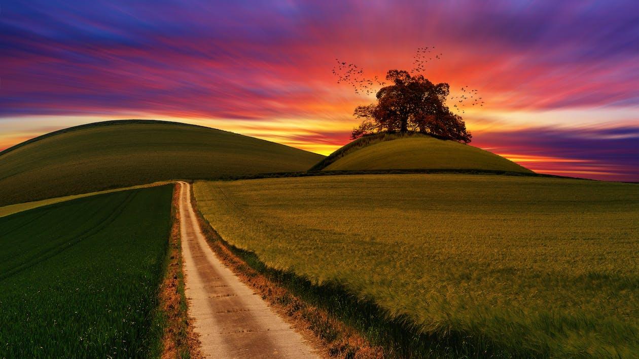 ชนบท, ดวงอาทิตย์, ต้นไม้