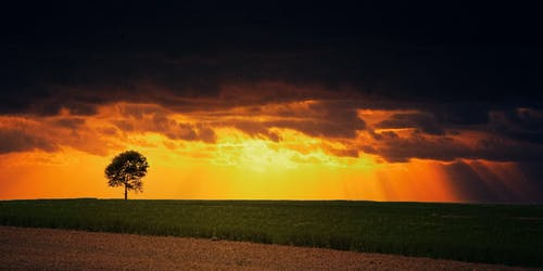 Imagine de stoc gratuită din apus, arbore, backlit, câmp