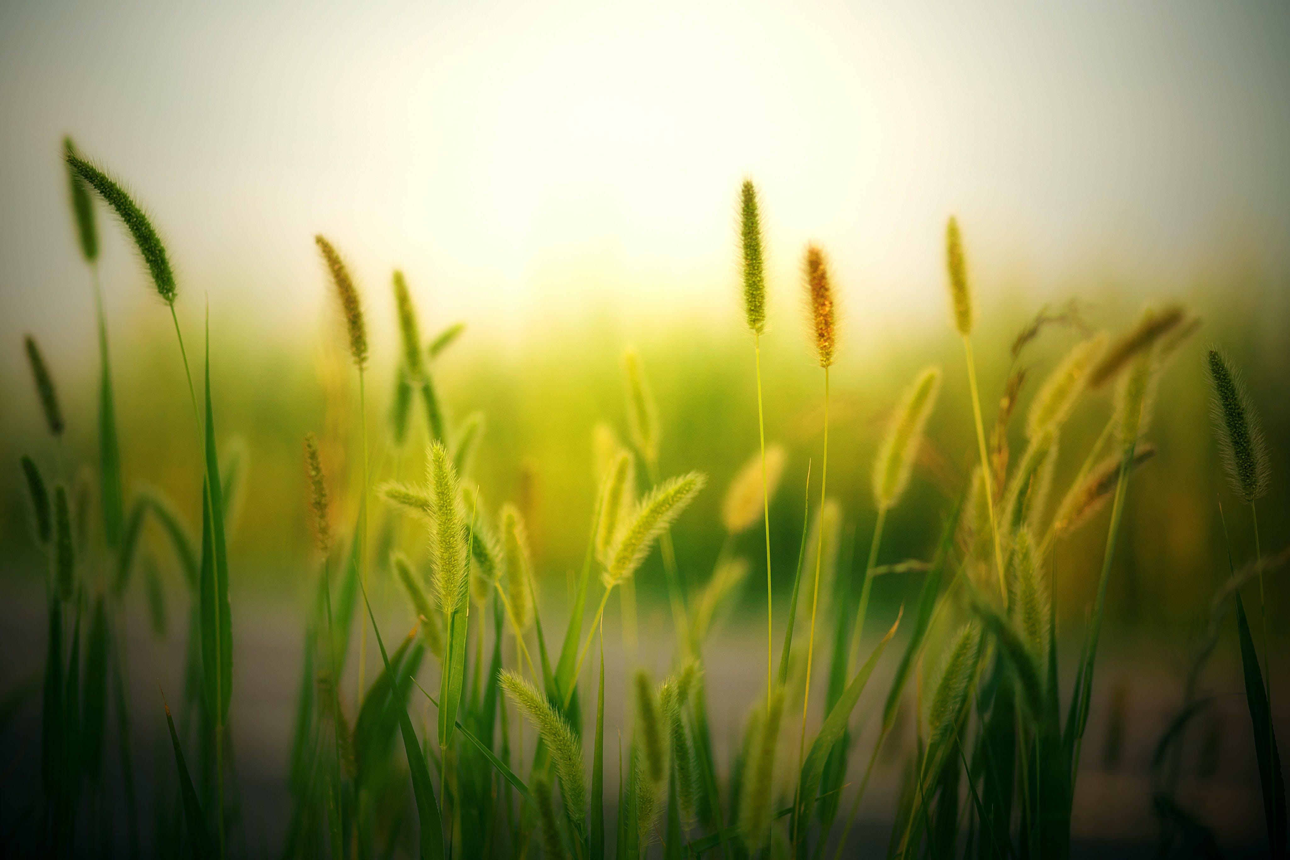 Gratis lagerfoto af agerjord, bane, gård, græs