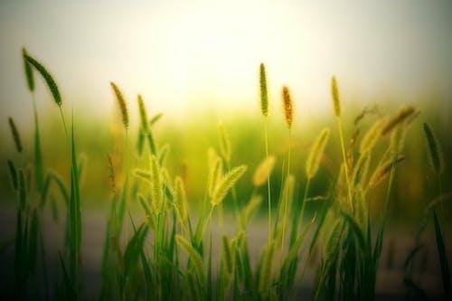 Бесплатное стоковое фото с зеленый, легкий, лето, пахотная земля