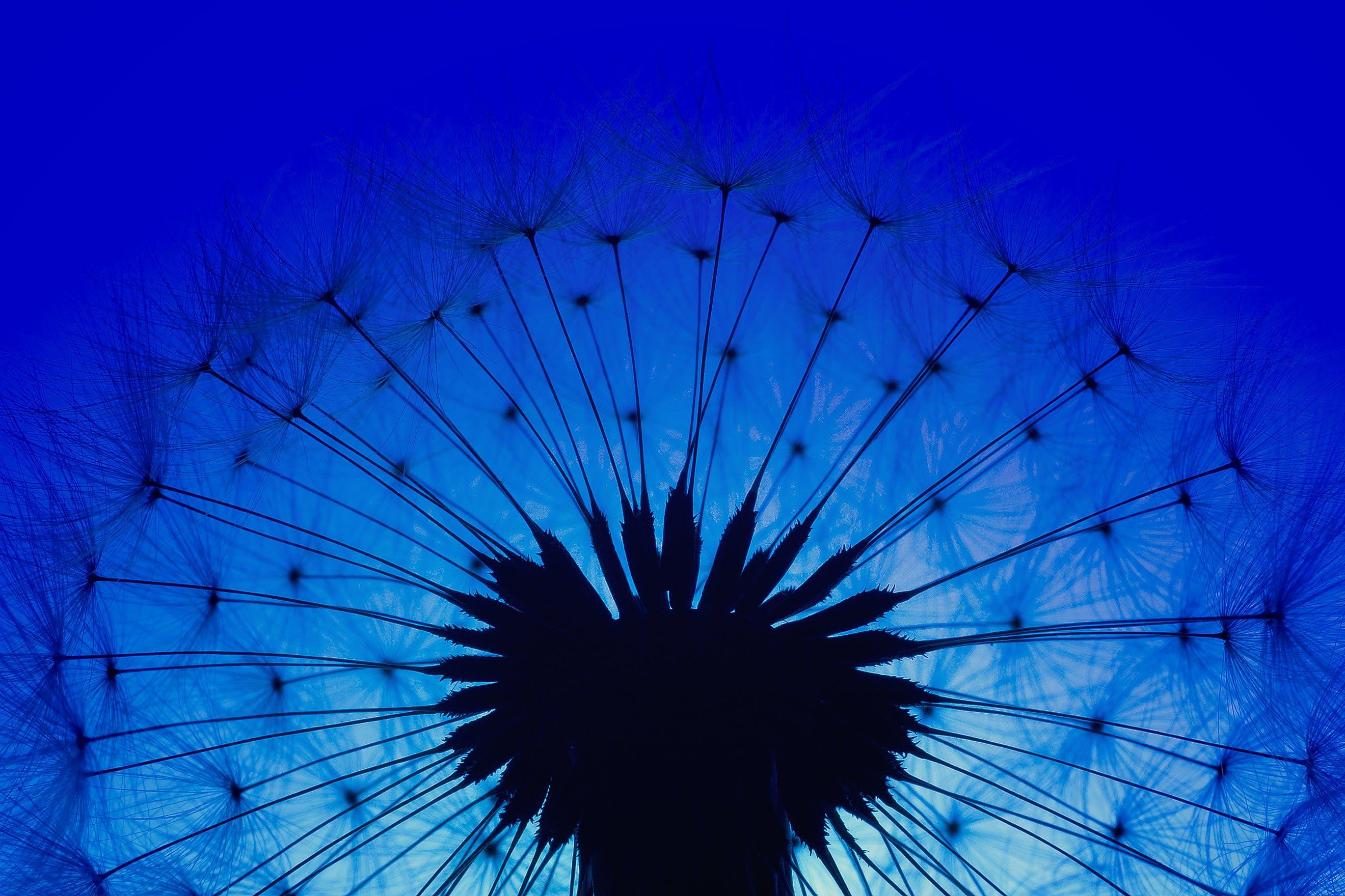 Kostenloses Stock Foto zu blau, blume, dunkel, farben
