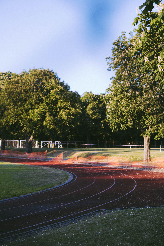 Gratis stockfoto met asfalt, begeleiding, bomen, daglicht