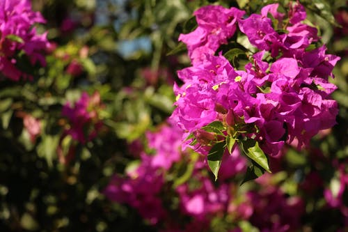 Free stock photo of flower, primavera