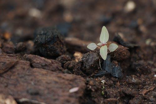 Kostnadsfri bild av liv, natur, växt