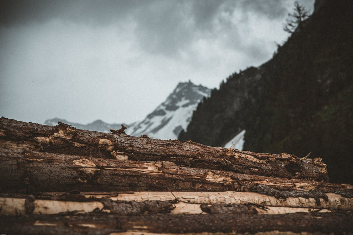 Tree Logs in Front of Snow Covered Mountain