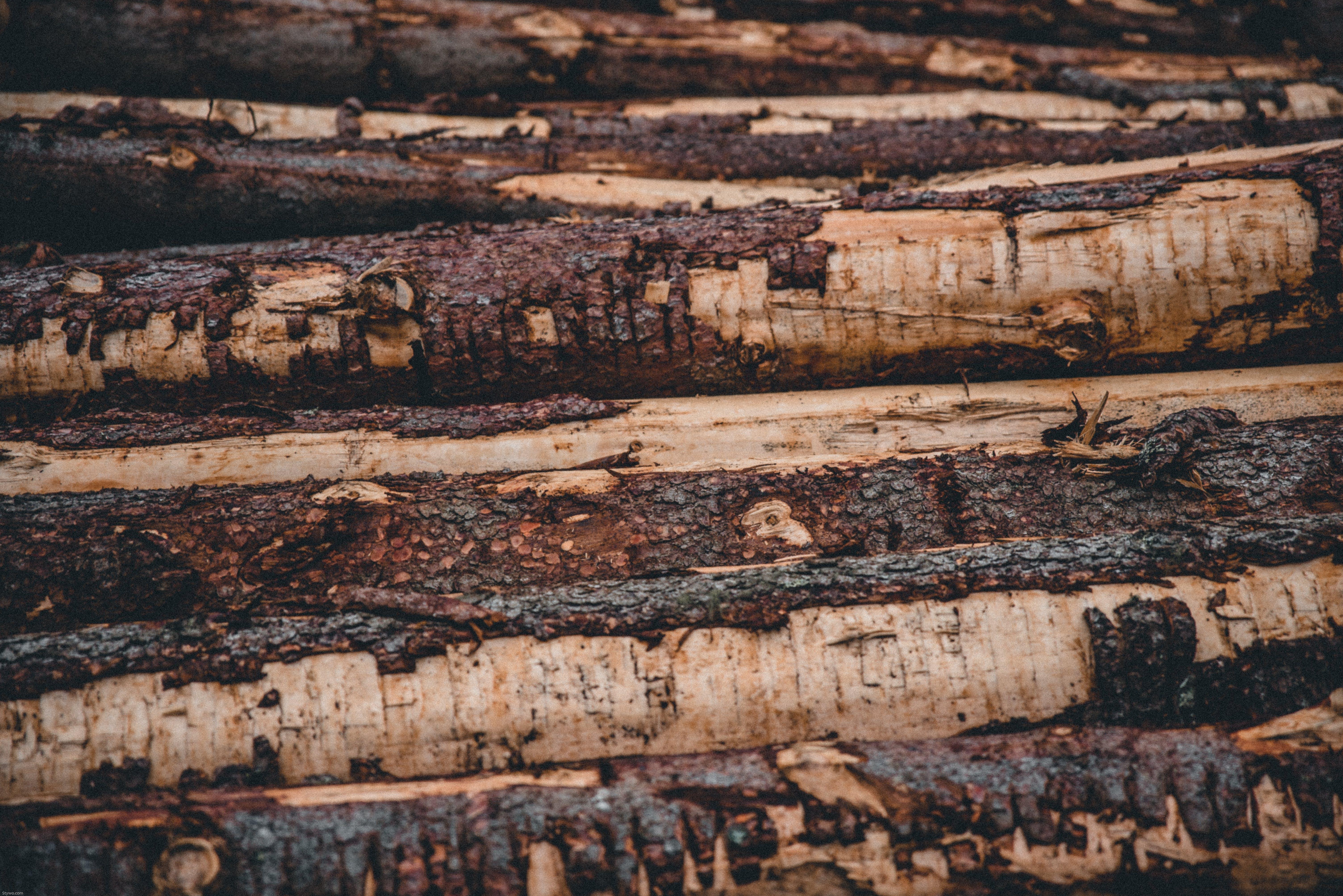 Piled Brown Tree Logs