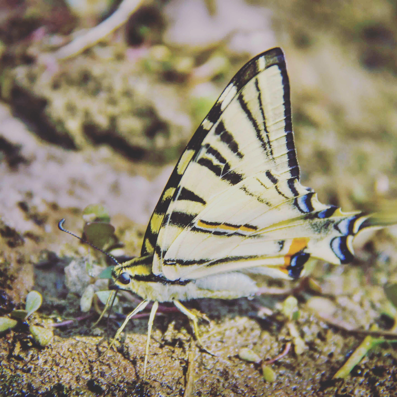 Foto stok gratis kupu-kupu