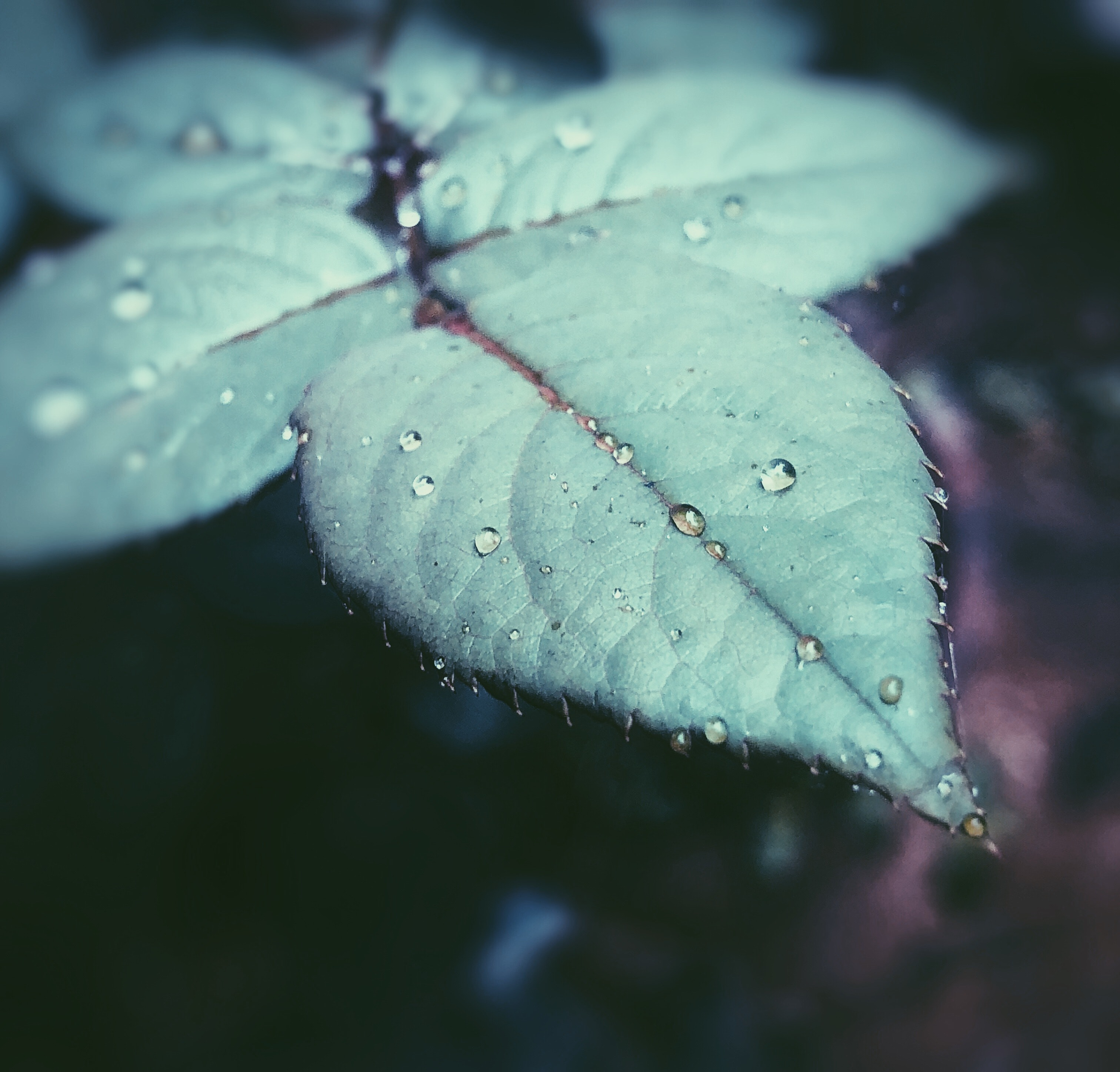 Lock Up Free Download Karan Aujla: Water Dews On Green Leaf Surface · Free Stock Photo
