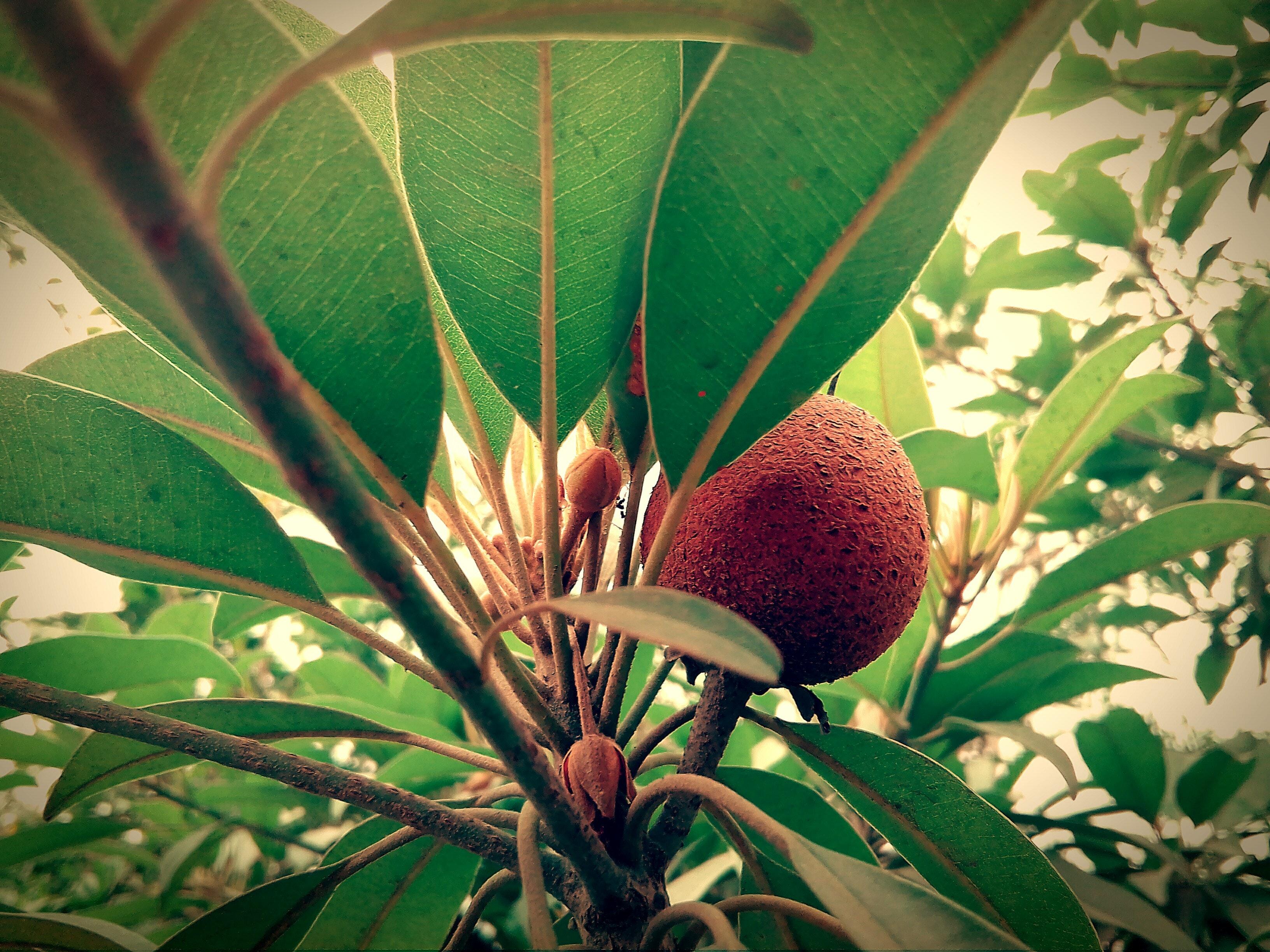 Free stock photo of desktop wallpaper, flower, fresh fruit