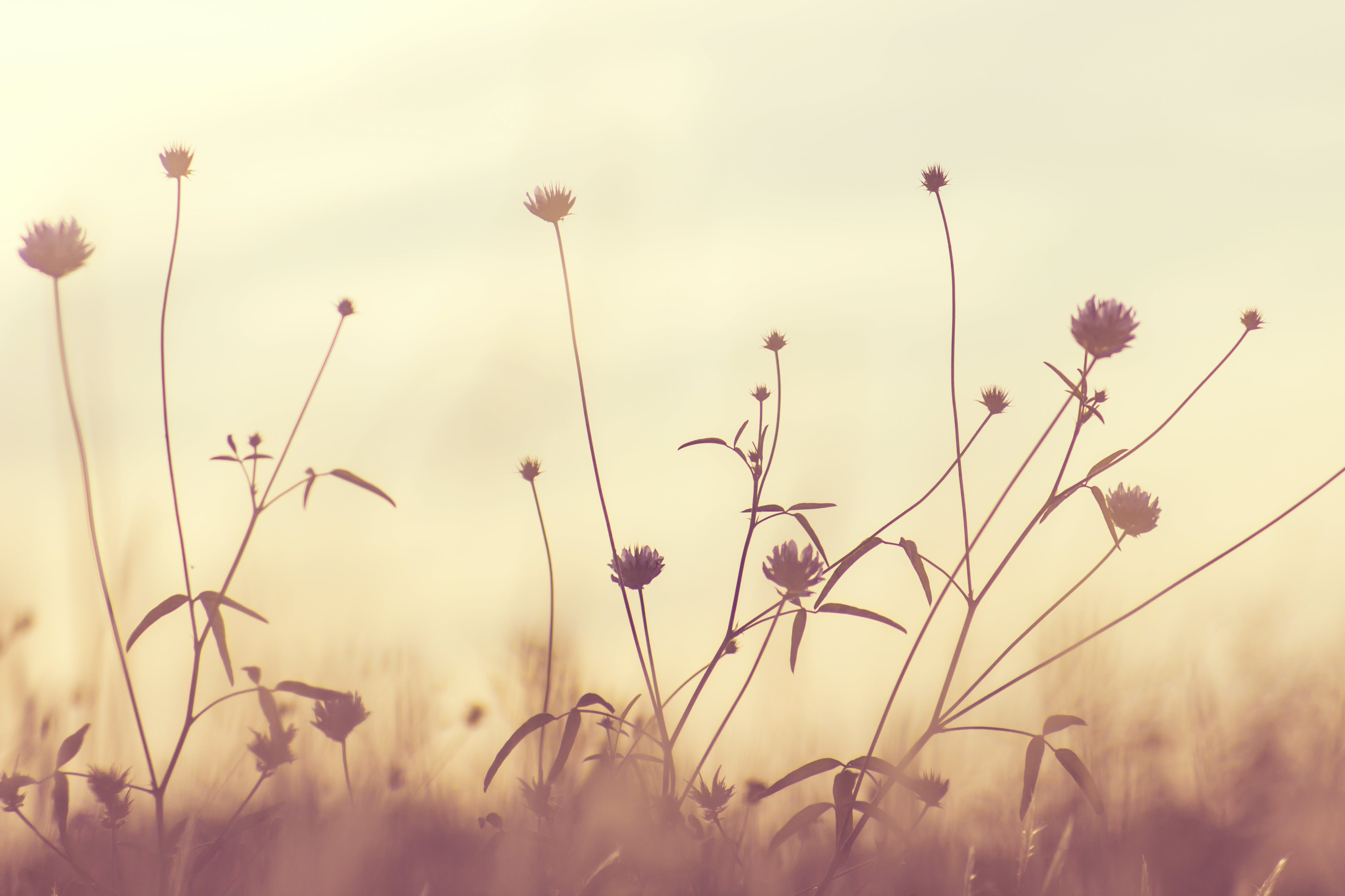 Free stock photo of nature, flowers, plants, bloom