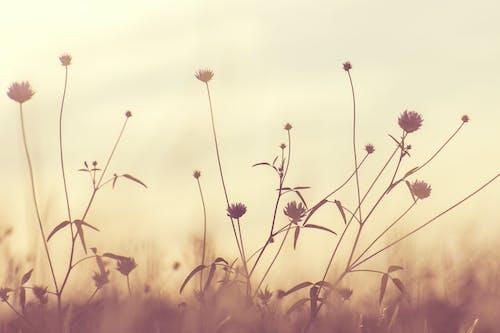 Immagine gratuita di bocciolo, fiori, flora, impianti
