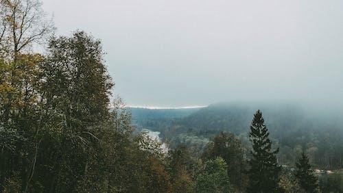 Základová fotografie zdarma na téma déšť, divoký, evropa, hdwallpaper