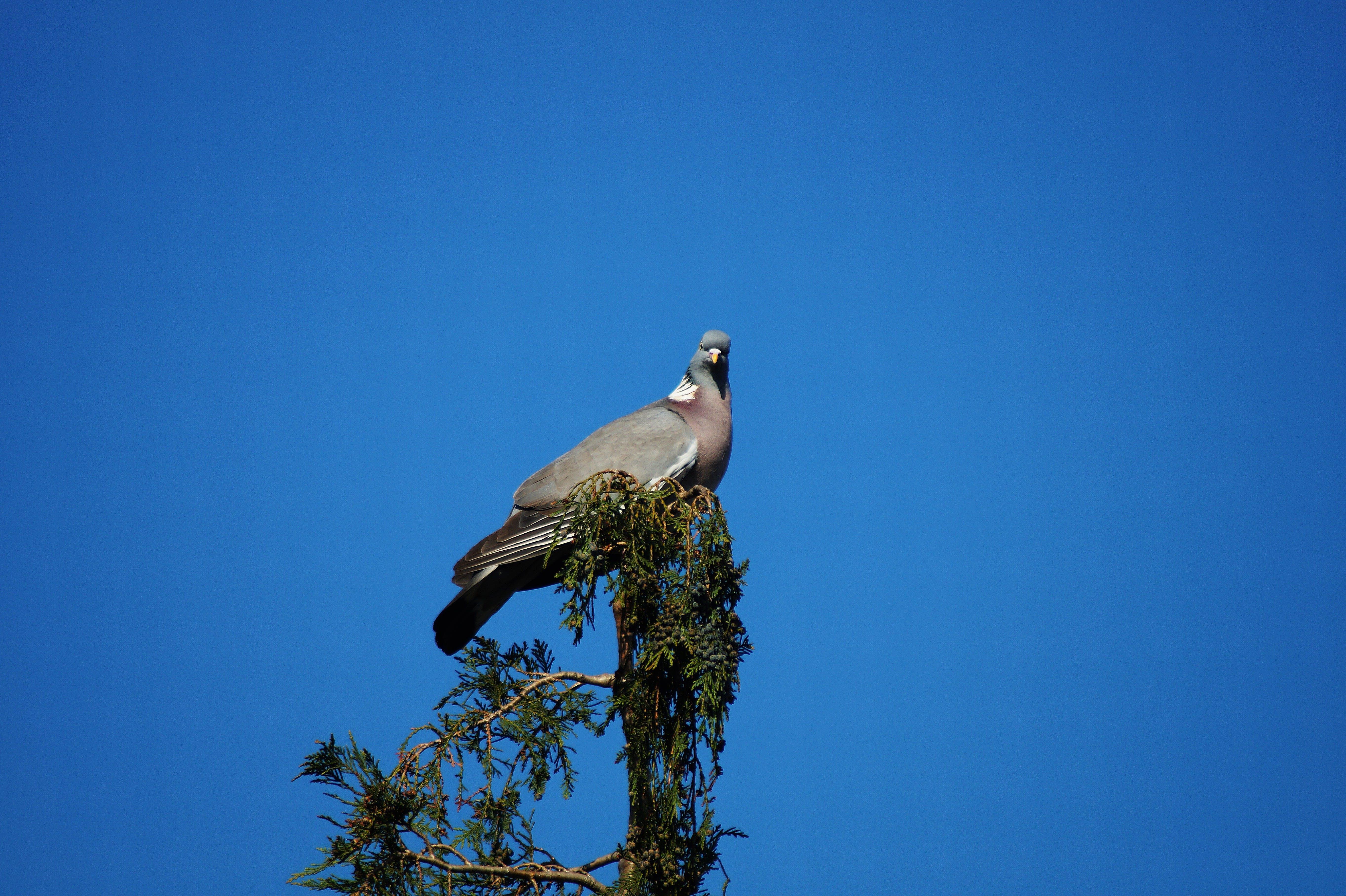 Kostnadsfri bild av blå himmel, dagsljus, djur, fjädrar