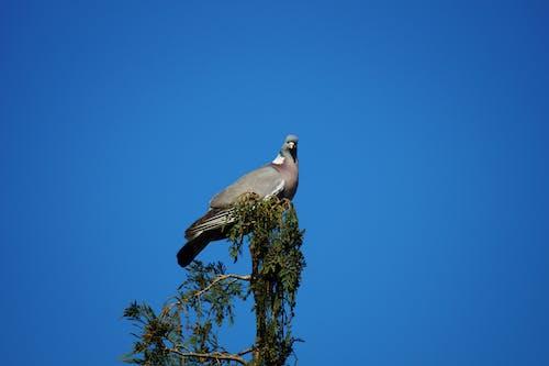 Fotos de stock gratuitas de al aire libre, alas, animal, árbol