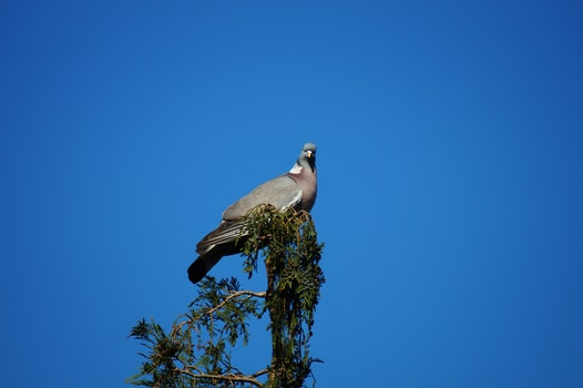 Free stock photo of nature, sky, bird, animal