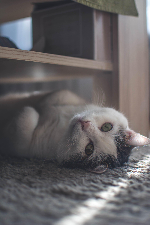 Free stock photo of animal, cute, cat, faded tones