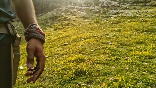 Бесплатное стоковое фото с рука, фото природы